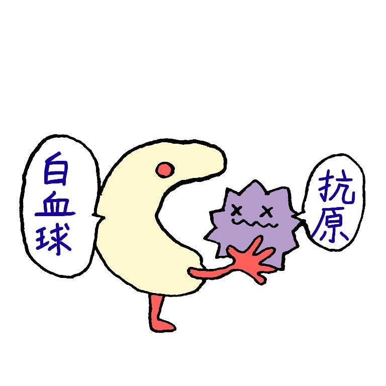 痛風発作に関係が深い白血球は発作時にどんな働きをするのか
